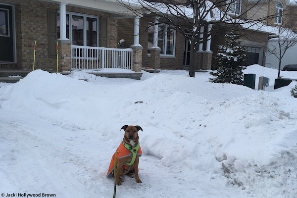 dog sitting on snowy icy driveway in front of snowbank